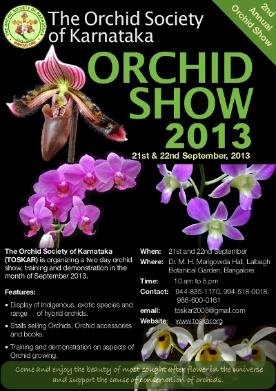 Orchid Show 2013