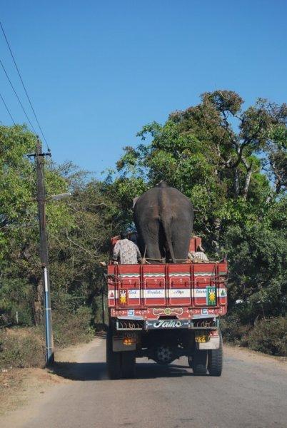 elephantix